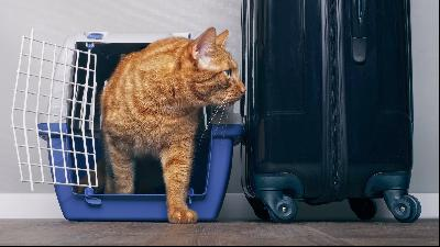 Expat identities: what to do with pets when you move