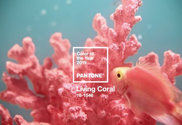 2019 Pantone Color of the Year | Living Coral
