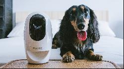 The best tech for pets