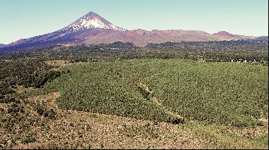 Fundo Araucarias - Forestry And Tourism Potential - Temuco / Chillán