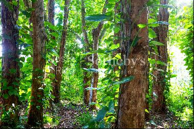 2´500acre Conservation Land With Precious Woods