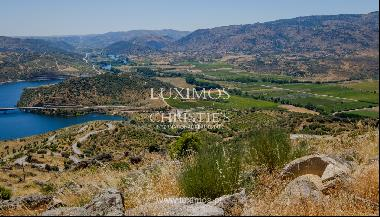 Sale: agricultural property in the region of Douro Superior, Portugal