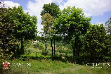 Tuscany - VILLA WITH OLIVE GROVE AND POOL FOR SALE LUCCA